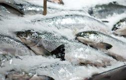 Retén fresco de salmones foto de archivo