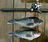 Retén profundo de la pesca en mar imagen de archivo libre de regalías