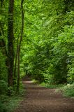 Big trees in the forest at spring. Retail of big trees in the forest at spring royalty free stock images