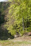 narrow path for hiking in the forest Stock Photography
