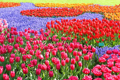 Retalhos coloridos do jardim dos Tulips Fotografia de Stock