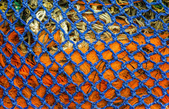 Rete blu ed arancio Fotografia Stock