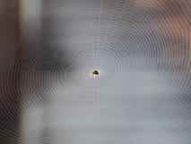 Rete del ragno Fotografia Stock Libera da Diritti