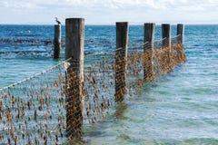 Rete dello squalo nell'isola del nord di Stradbroke, Queensland Immagine Stock