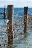 Rete dello squalo nell'isola del nord di Stradbroke, Queensland Immagini Stock Libere da Diritti