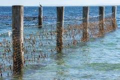 Rete dello squalo nell'isola del nord di Stradbroke, Queensland Fotografia Stock Libera da Diritti