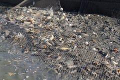 Rete a deriva con i pesci Immagini Stock