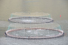 Rete di color salmone del pesce dell'azienda agricola Fotografia Stock Libera da Diritti