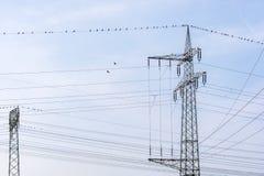 Rete di elettricità con l'albero del ramo fotografie stock