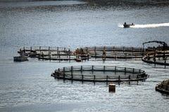 Rete di riparazione dei lavoratori sulle gabbie del pesce Fotografia Stock Libera da Diritti