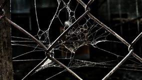 Rete di Spidernet Fotografia Stock