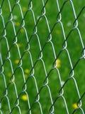 Rete fissa Fotografie Stock Libere da Diritti