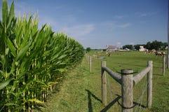 Rete fissa dei Amish - paesaggio Fotografie Stock Libere da Diritti