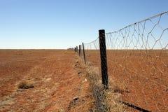 Rete fissa del Dingo dell'australiano outback fotografie stock