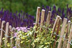 Rete fissa di legno della castagna in primavera Immagini Stock