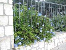 Rete fissa e fiori Immagine Stock Libera da Diritti