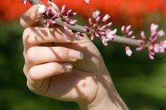 Retenir le branchement de floraison Image libre de droits
