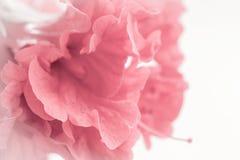 Retentit à abrégé sur floral doux style le macro concept pour le style de pensée loyalement Photo stock