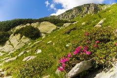 retezat национального парка Стоковое Фото