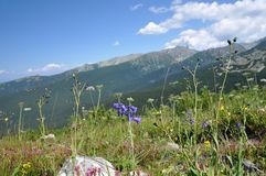 Retezat góra, Rumunia Obraz Stock