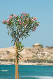 Rethymno, Crete Stock Photography