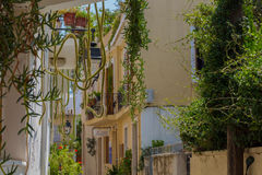 Rethymno, Greece - August  2, 2016:  Big cactuses on the balcony Stock Image