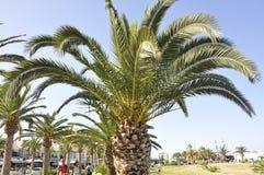Rethymno, am 1. September: Palmen im allgemeiner Park-Garten von der Rethymno-Stadt von Kreta in Griechenland lizenzfreie stockbilder