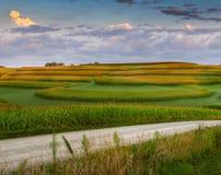 Reticoli del campo di cereale e strada della ghiaia Fotografia Stock Libera da Diritti
