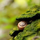 Reticoli della natura Fotografie Stock