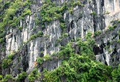 Reticoli e strutture della roccia Fotografia Stock