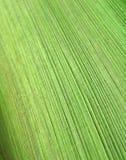 Reticolo astratto della corteccia della palma fotografia stock