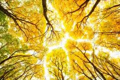 Reticolo degli alberi di autunno Fotografia Stock Libera da Diritti