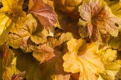 Reticolo dei fogli di autunno Fotografia Stock Libera da Diritti