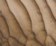 Reticolo del fango Fotografia Stock