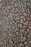 Reticolo del fango - verticale Immagine Stock
