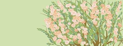 Reticolo del fiore Immagine Stock Libera da Diritti