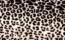 Reticolo del leopardo Fotografia Stock