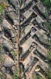 Reticolo del pneumatico sulla terra Immagine Stock Libera da Diritti