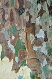 Reticolo dell'albero piano Fotografia Stock