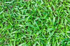 Reticolo dell'erba per cenni storici. Fotografie Stock