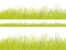 Reticolo dell'erba verde su priorità bassa bianca Immagini Stock
