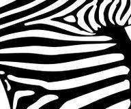 Reticolo della banda della zebra Fotografie Stock Libere da Diritti
