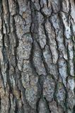 Modello della corteccia di albero Fotografie Stock Libere da Diritti