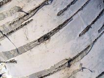 Reticolo della corteccia di betulla Fotografie Stock