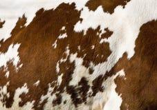 Reticolo della mucca Immagine Stock