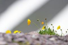 Reticolo della neve del fiore fotografie stock libere da diritti