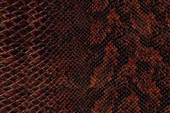 Reticolo della pelle di serpente Immagine Stock Libera da Diritti