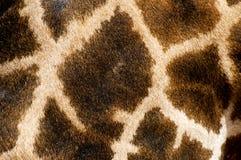 Reticolo della pelliccia della giraffa Fotografia Stock