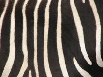 Reticolo della pelliccia della zebra Fotografia Stock Libera da Diritti
