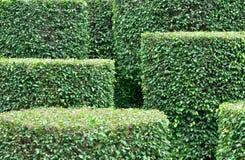 Reticolo della pianta di giardino Immagine Stock